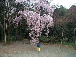 Takasakura